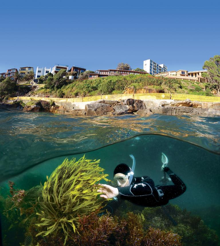 Celebrating Sydney's Underwater Forests